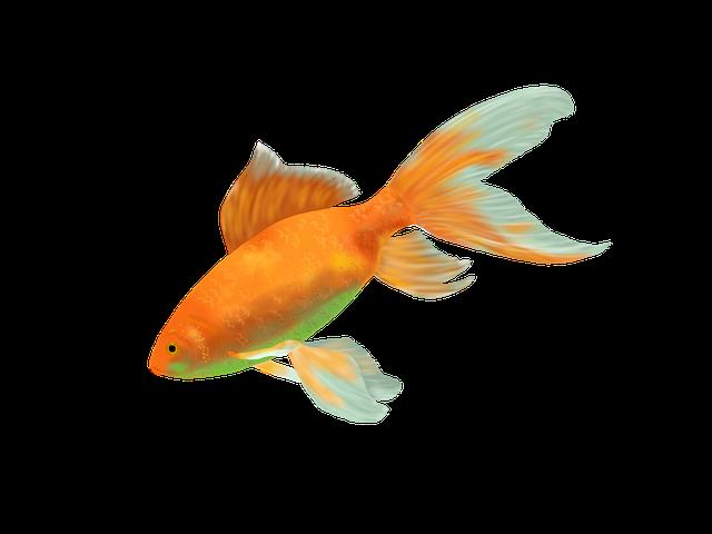 2 - 10 Jenis Ikan Hias Air Tawar