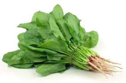 ternyata-sayuran-bayam-pendongkrak-orgasme-viagra-alami