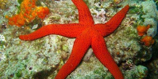 3 bintang-laut-rev1
