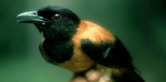 6 burung-beracun-ini-bisa-buat-manusia-mati-rasa-dan-geli