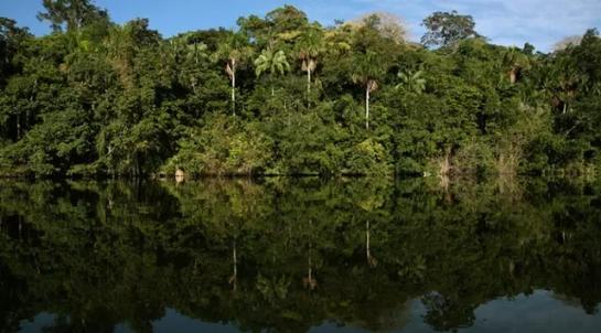 Masyarakat di Amazon Ini Punya Jantung Tersehat, Apa Resepnya