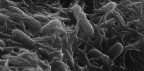 penemuan-revolusioner-bakteri-bisa-dijadikan-pembangkit-listrik