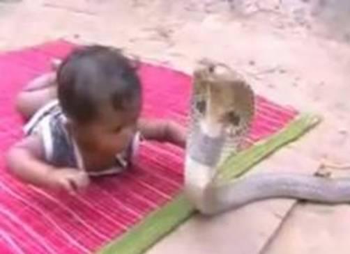 1 bayi-main-ular2